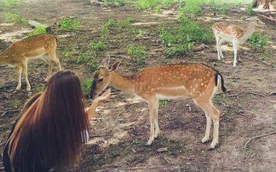 Ausflugsempfehlung – Damwild streicheln im Wildpark Ernstbrunn