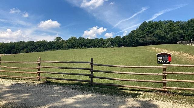 Wildpark Ernstbrunn Ausflug - Meine Erfahrung - Landschaft