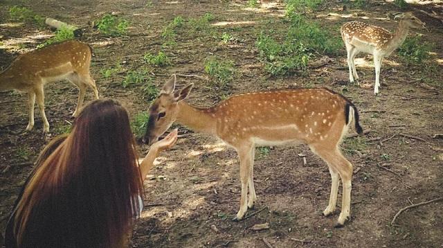 Wildpark Ernstbrunn Ausflug - Meine Erfahrung - Rehe füttern 2