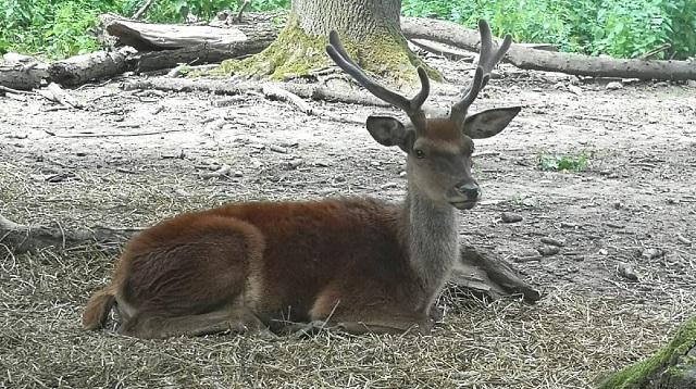 Wildpark Ernstbrunn Ausflug - Meine Erfahrung - Rotwild