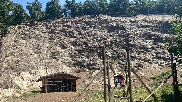Wildpark Ernstbrunn Ausflug - Meine Erfahrung - Steinbock Felswand